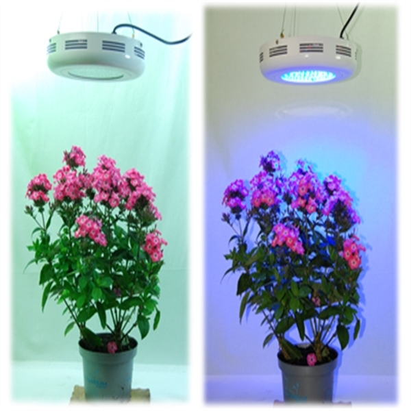 90w grow led ufo blau pflanzenlampe growlampe wuchs for Grow lampen kaufen